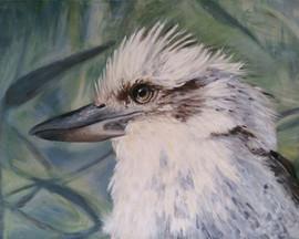 kookaburra-print-8x10-mr-kook-australian
