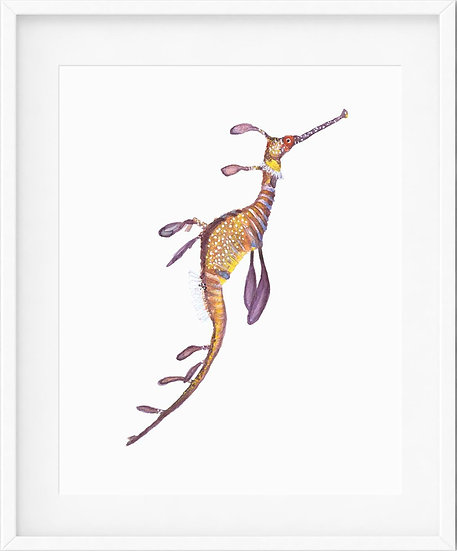 Weedy Seadragon - limited edition print 1/100