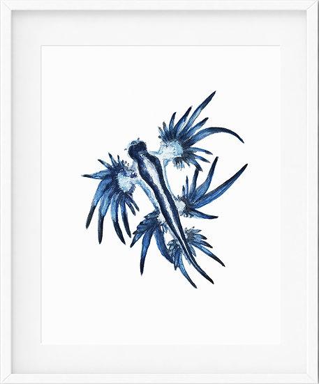 Glaucus Atlanticus - limited edition print 1/100