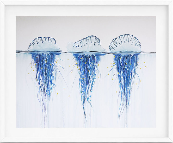 Bluebottle Jellyfish - limited edition print 4/100