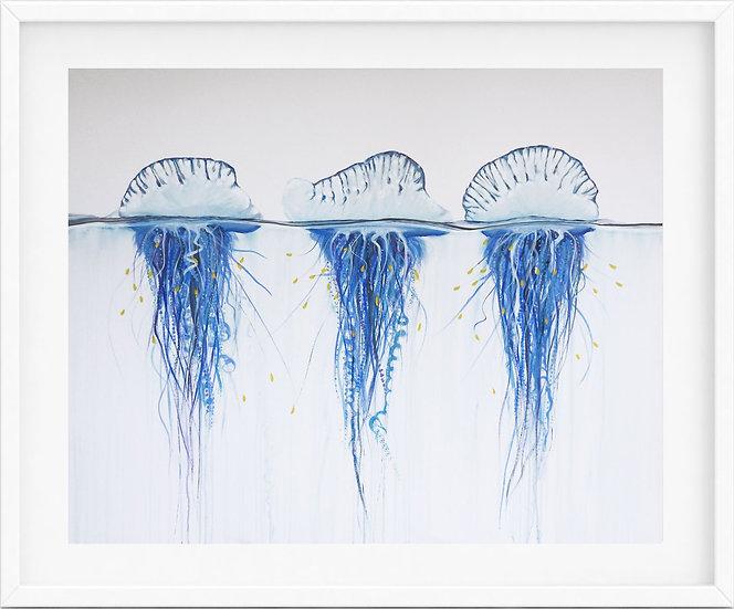 Bluebottle Jellyfish - limited edition print 2/100