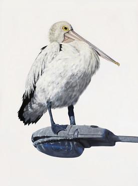australian pelican painting coastal art