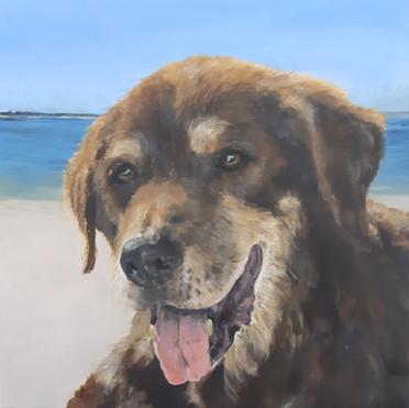 dog painting central coast.jpg