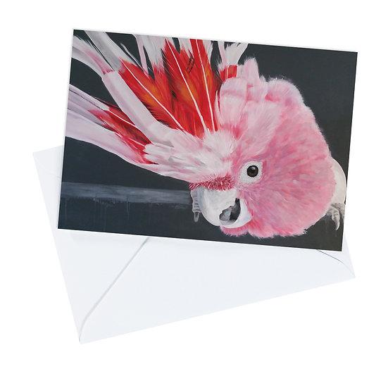 Major Mitchells Cockatoo Greeting Card