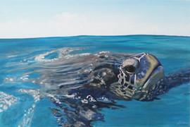 sea-turtle-painting-allure-beach-art.jpg