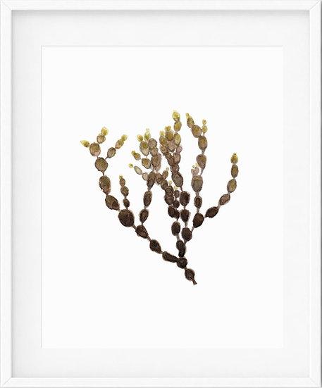 Seaweed - limited edition print 1/100