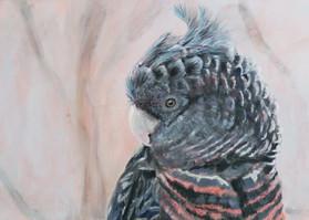 gang gang print-australian-bird-art