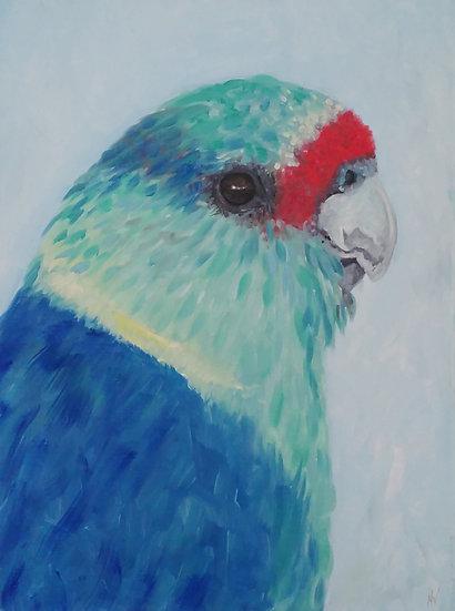 Australian Ringneck Parrot Painting - Framed