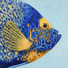 bluefaced-angelfish-painting-naomi-veitc