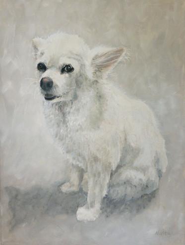 pet-portraits-chihuahua.jpg