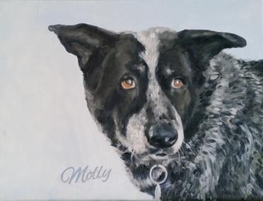 dog-portraits-cattle-dog.jpg