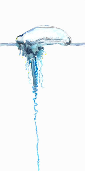 Bluebottle Painting