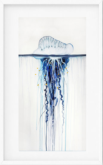 Bluebottle Jellyfish - limited edition print 2/100