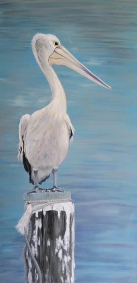 pelican-painting-australian-bird-art