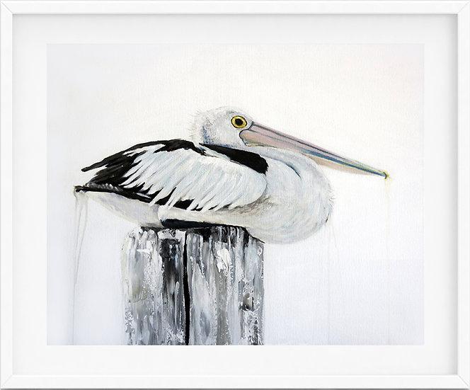 Australian Pelican - limited edition print 3/100