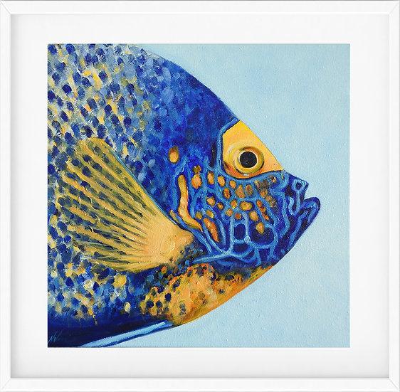 Angelfish - limited edition print 1/100