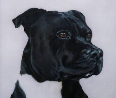 pet-portrait-staffy.jpg
