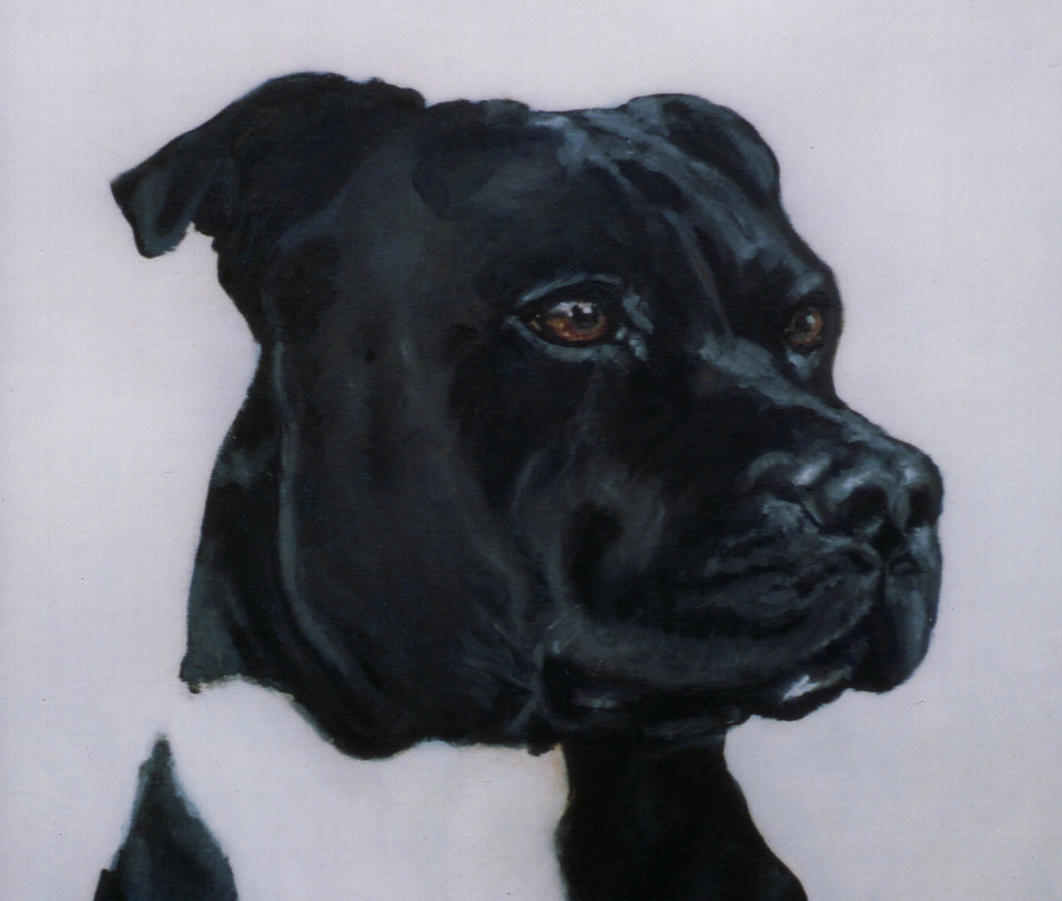 pet-portrait-staffy.jpg