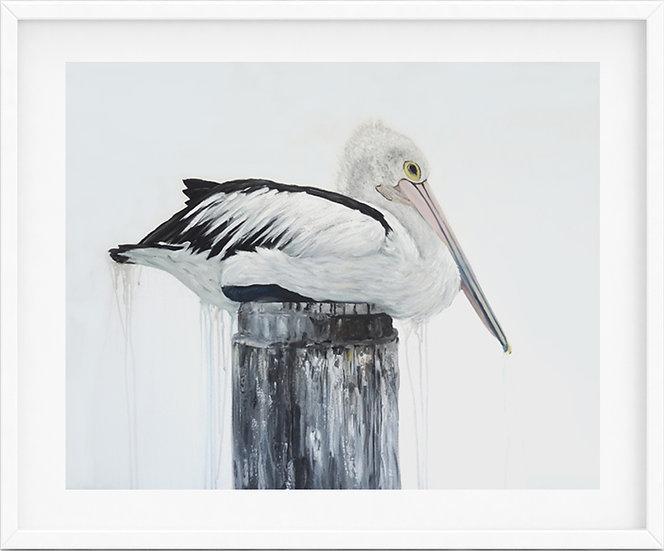 Australian Pelican - limited edition print 2/100