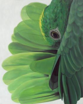amazon-parrot-painting-bird-art