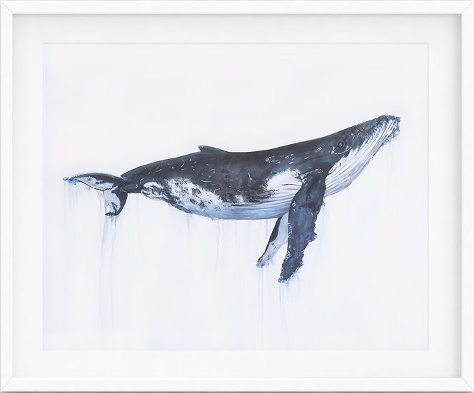 Humpback Whale - limited edition print 4/100