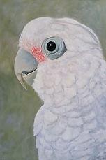 corella-painting-bird-art-naomi-veitch