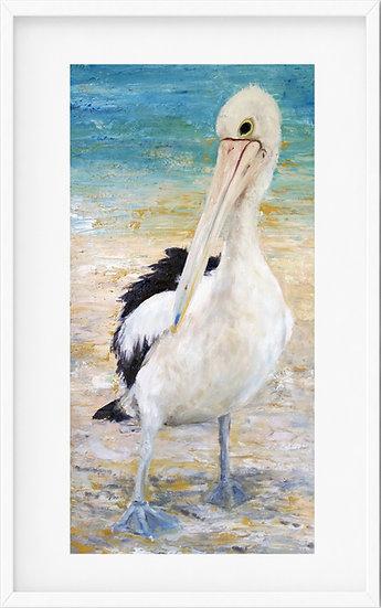 Australian Pelican - limited edition print 7/100