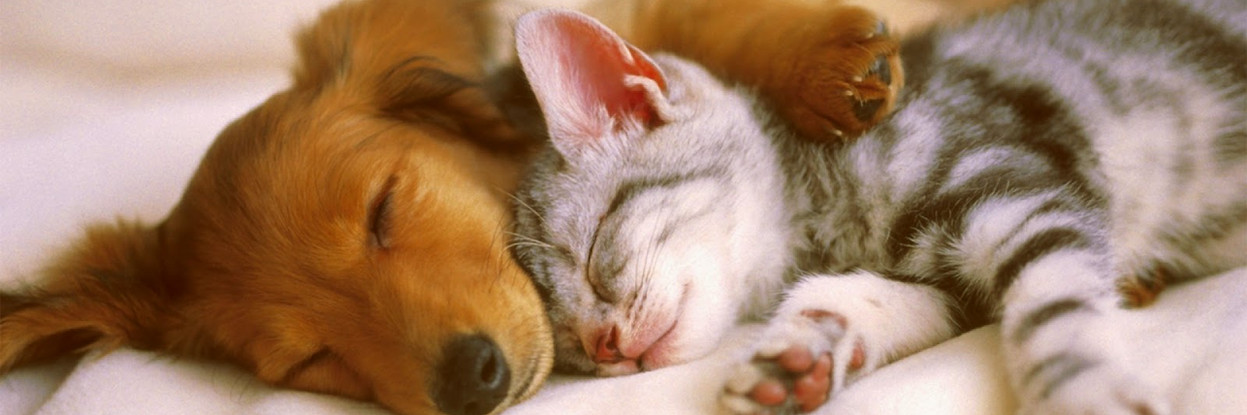 Cats-And-Dogs-e1383045695126.jpg