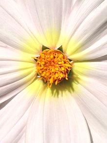Brahma Kumaris vzw, Raja Yoga Meditatie, België, Bossheid Overwinnen