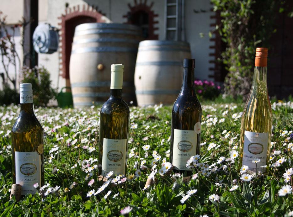 Présentation de nos vins blanc.