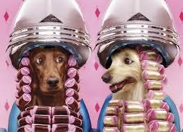 Recette naturelle soins cosmétiques pour chien