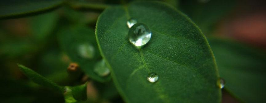 Superhydrophobic.jpg