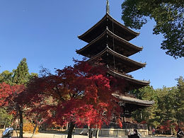 The five-storied pagoda of Ninna-ji takes on a typical architectural appearance of the Edo period.