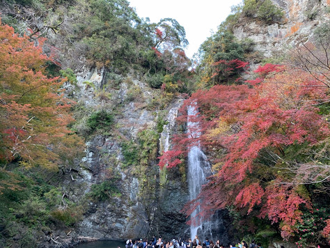 Minoh Quasi-national Park in the north of Osaka City.