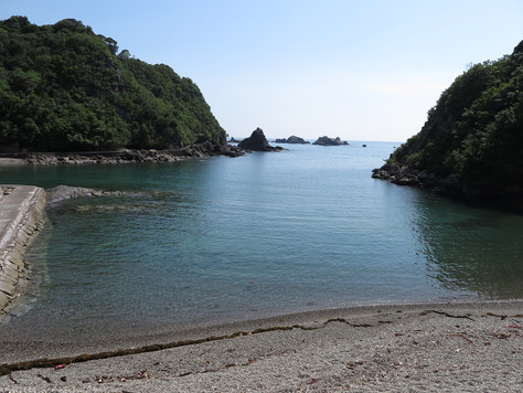 Many dolphins are periodically captured in an inlet of Taiji Town, Wakayama Prefecture.