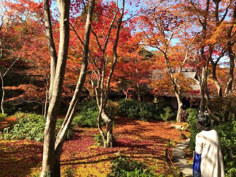 """Okochi-sanso"" in Arashiyama, Kyoto, originally was a private villa of a former movie star."