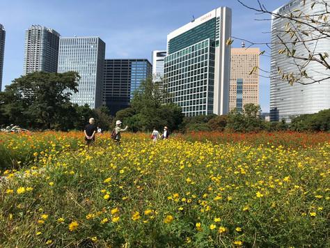A variety of flowers in each season is in full bloom in Hamarikyu Japanese Gardens.