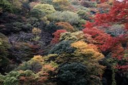 Kyoto008