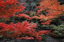Kyoto006
