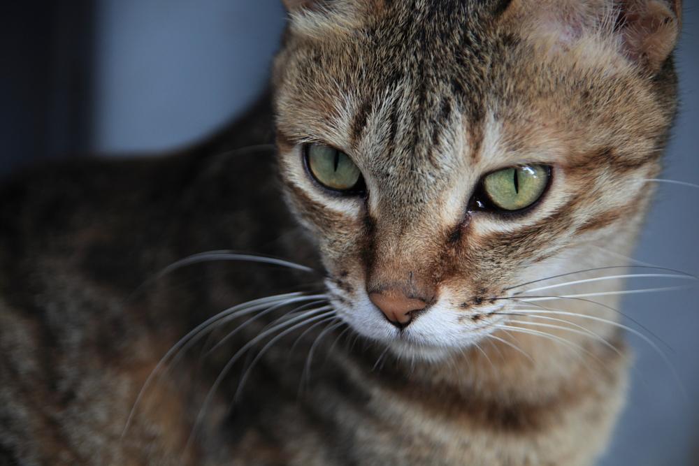 cat014