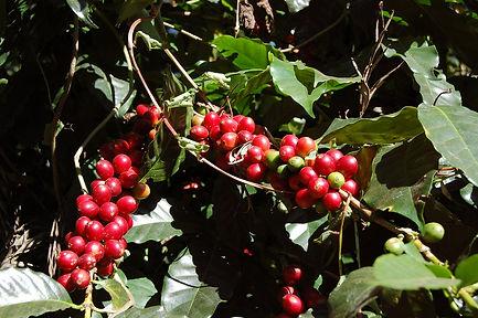 coffee-1786666_1280.jpg