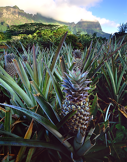 pineapple-669456_960_720.png