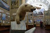 Белый медведь в музее арктики и антарктики рядом с отелем андреевский