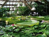 ботанический сад в петербурге