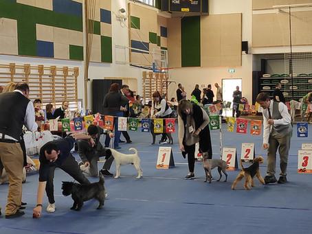Terrier Club Show, Petah-Tikva