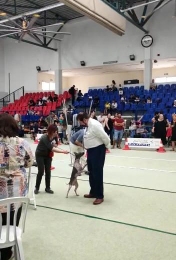 Israel Terrier Club show