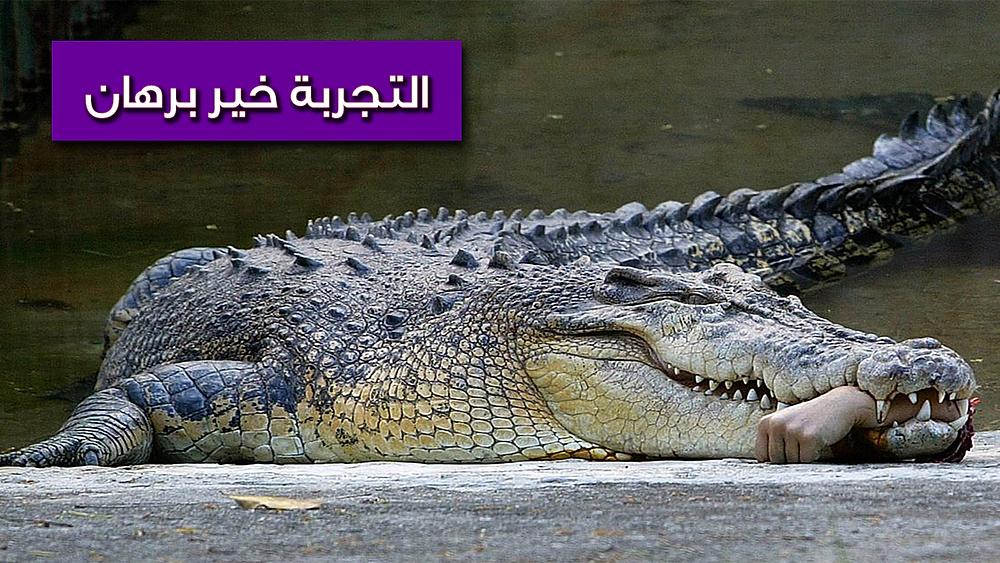 تمساح وفي فكه بقايا يد بشرية