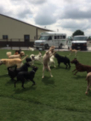 dogs in yard.jpg
