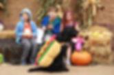 Mac, Alex, Cam Halloween Photo.jpg