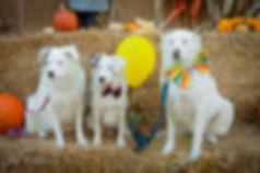 Fall festival puppies.jpg